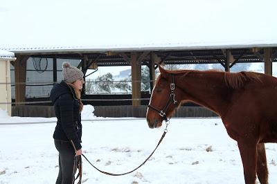 Prendre du temps à pied avec son cheval.