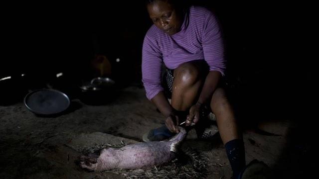 Comer animais selvagens sem controle, um barrila de pólvora para a saúde mundial