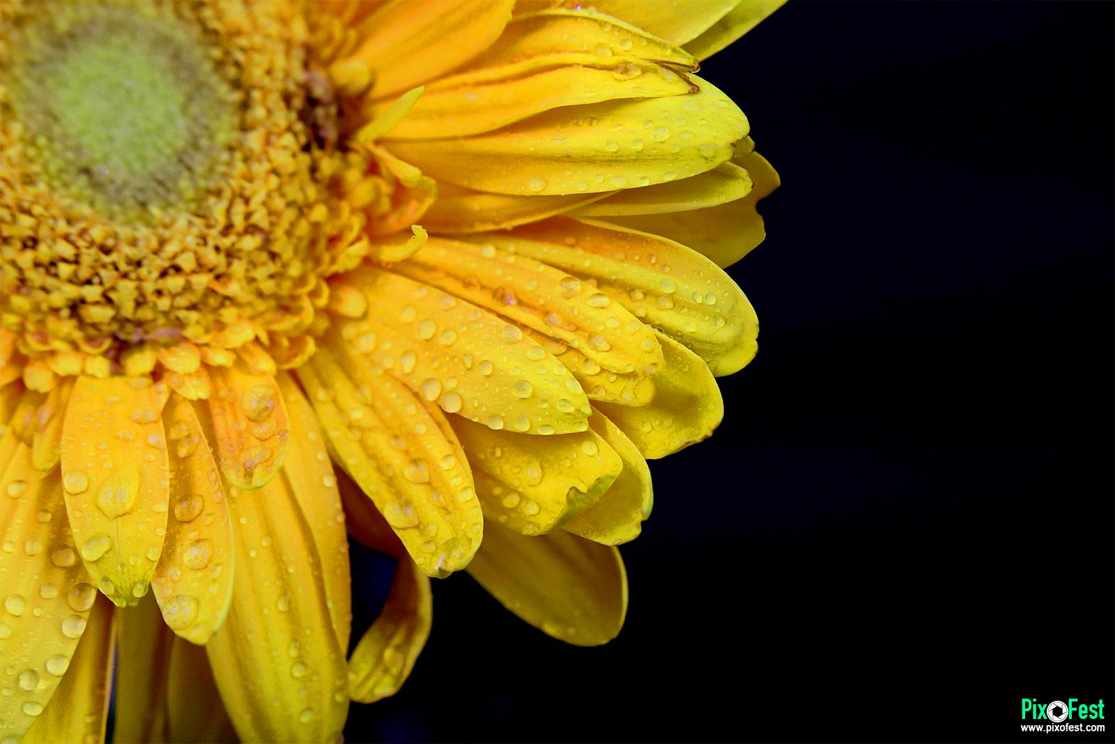 sunflower,flowers,nature,flower,redsunflower,sunflowerseed,sunflowers,flowersphotography,photography,sunflowerwithwater,sunflowerwithwaterdrop,summer,pixofest