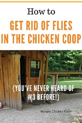 fly free chicken coop after following these instructions