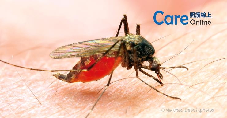 防蚊大作戰-照護線上