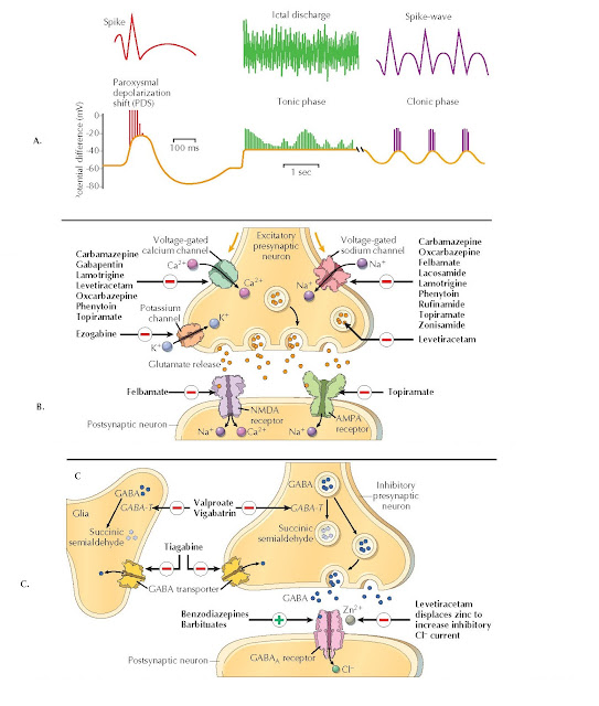TYPES OF ELECTRICAL DISCHARGES IN GENERALIZED SEIZURES AND SITES OF ACTION OF ANTISEIZURE MEDICATIONS