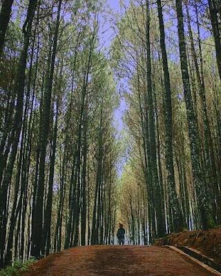 Rute Dan Lokasi Bukit Moko Bandung