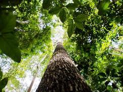 Valor da produção florestal no Brasil atinge R$ 20,6 bilhões.