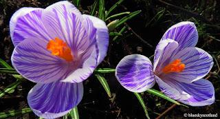 Springtime.  An Alchemy Occurs.