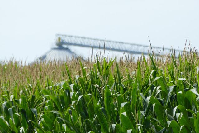 on-farm research minnesota nitrogen fertilizer