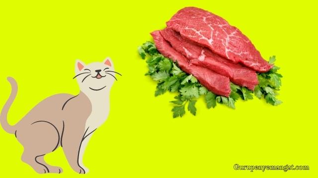 Resep Makanan Kucing Olahan Daging Sapi