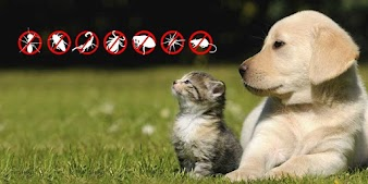Como dedetizar a casa sem afetar seus animais de estimação