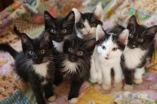 تعرف علي اهم الاشياء حول ولادة القطط للمبتدئين الحفاظ علي القط حديث الولادة