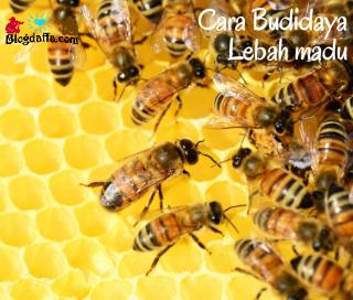 Cara Budidaya Lebah Madu Untuk Pemula