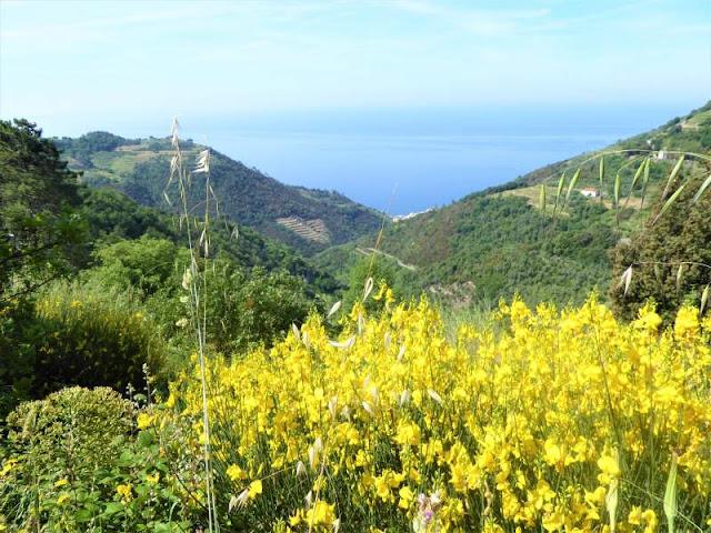 panorama litorale di Vernazza