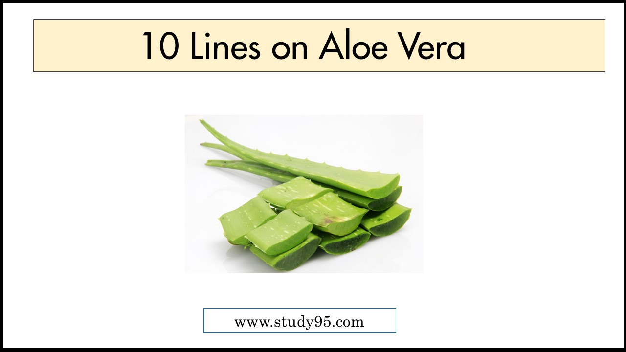 Few lines on Aloe Vera