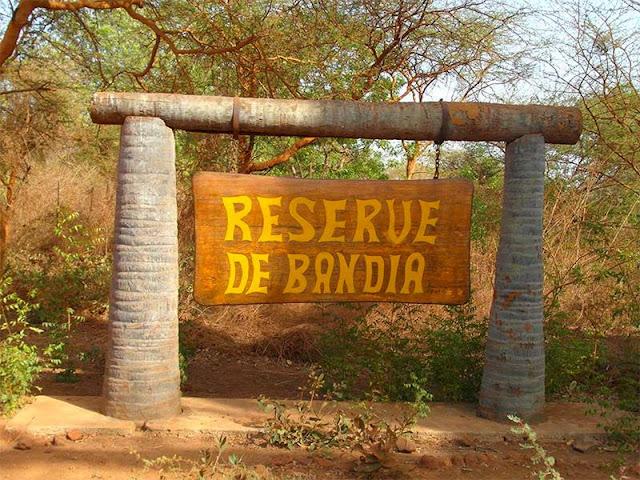 Bandia, la première réserve privée du Sénégal : Tourisme, réserve, parc, Bandia, zone, hôtel, safari, vacances, nature, végétation, animaux, visite, voyage, LEUKSENEGAL, Sénégal, Dakar, Afrique