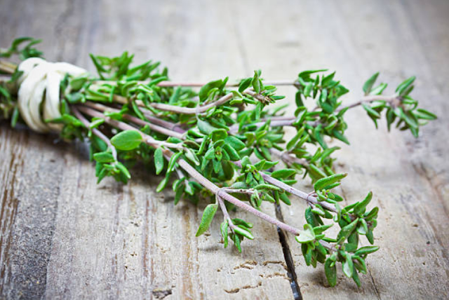 Not Only as a Spice: These 3 Benefits of Thyme for Health