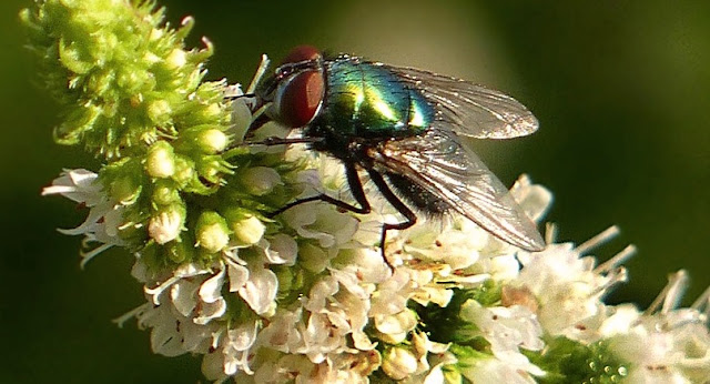 Rahasia DiCiptakannya Lalat, Banyak Orang Tidak Mengetahuinya