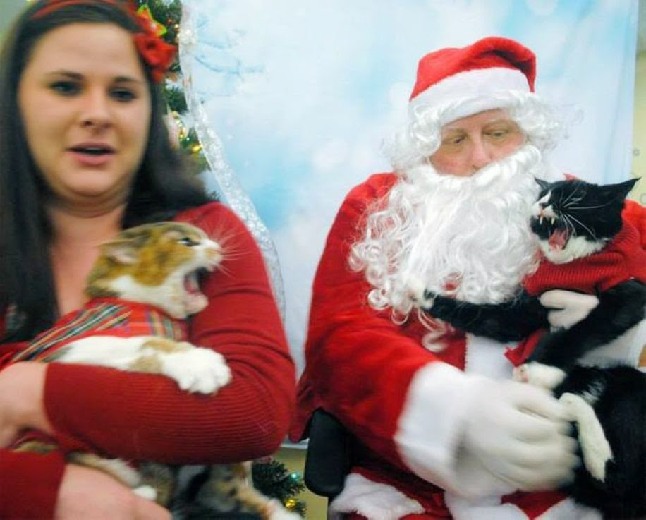 These Pets Don't Know How to Enjoy Christmas