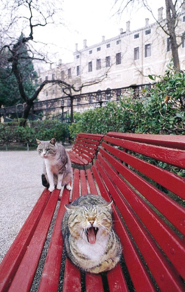 Stray cats of Venice, Italy