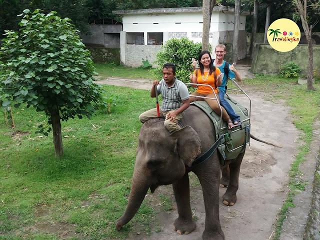 naik gajah di gembira loka zoo