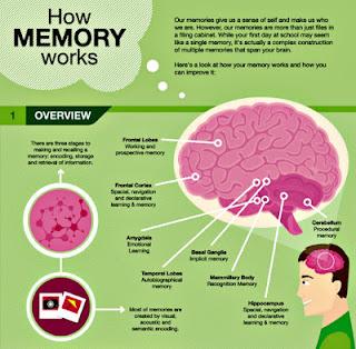 memory infographic