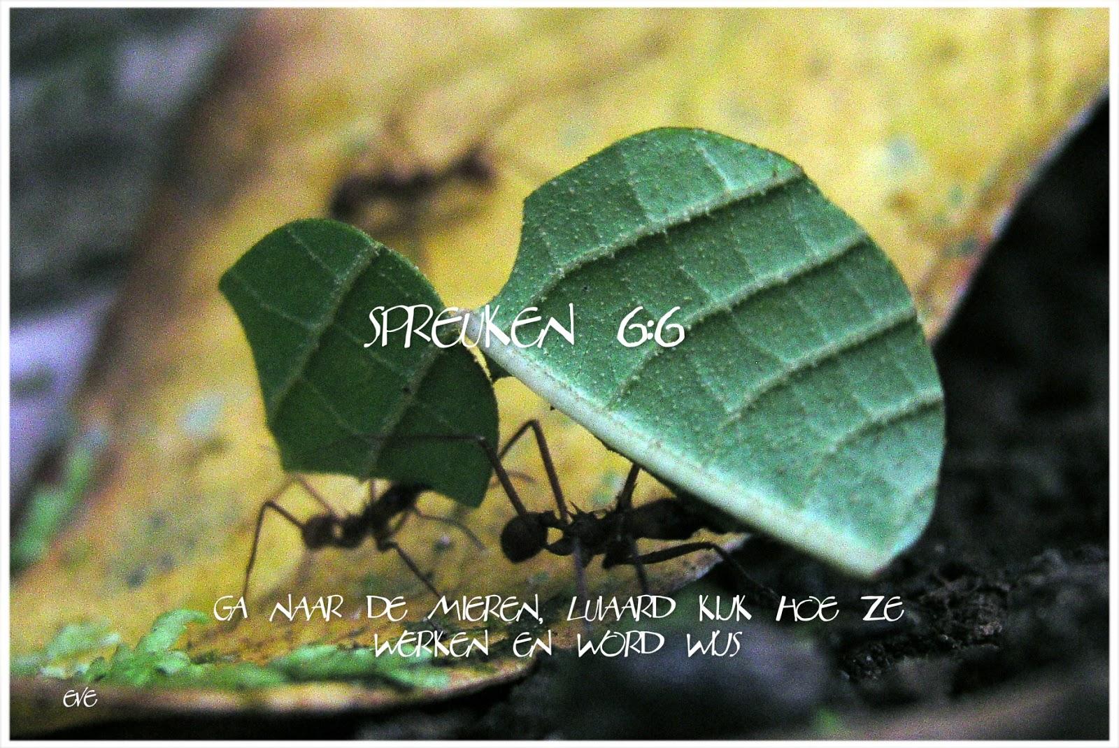 spreuken 6 6 Good Morning Girls NEDERLAND: Spreuken 6 spreuken 6 6