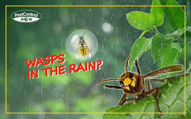 do-wasps-come-out-in-the-rain