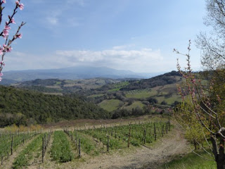 Salicutti  Montalcino Tuscany