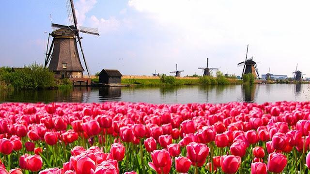 طقس مشمس ودافئ خلال الأيام القادمة في هولندا