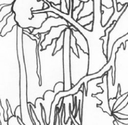 amazon rainforest coloring pages | Wild Treasures: Amazon Coloring Pages
