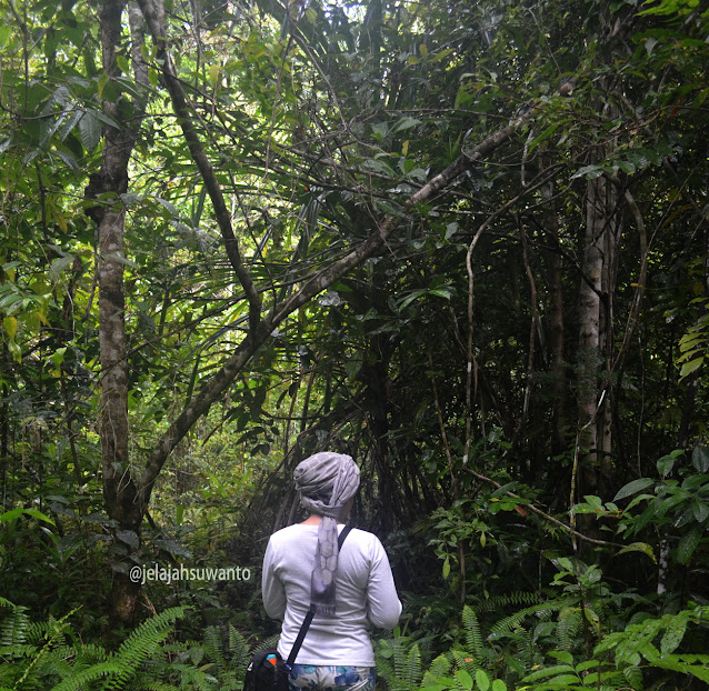 Mendengarkan harmoni magis suara hutan di sekitar Batu Lima Homestay Raja Ampat ⒸJelajahsuwanto