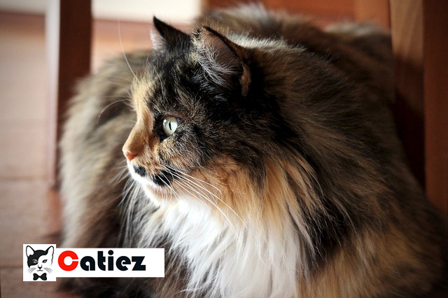 persian cat - all you want to know about persian cats
