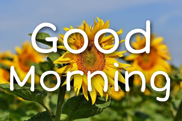 good morning images with fresh flowers