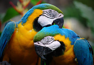 Parrot Facts in Hindi