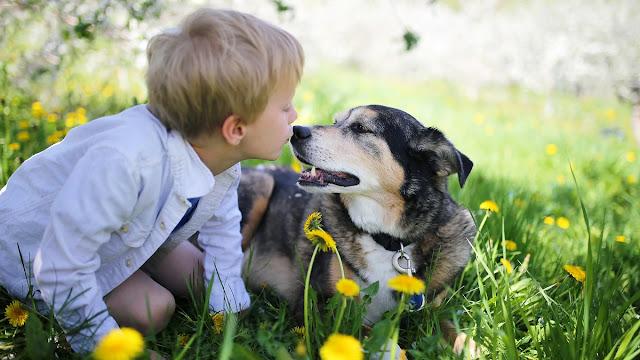 Algunas personas quieren más a sus mascotas que a otros seres humanos, según estudio