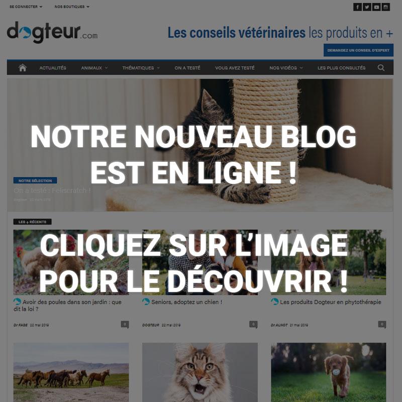 Blog Dogteur