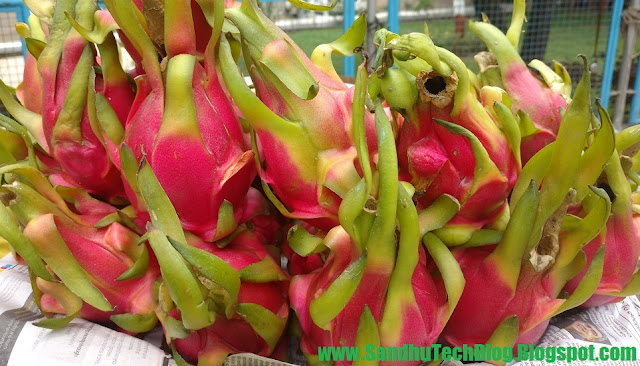 how dragon fruit improve helth and sex life