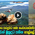 Life story of Galle Fort cliff-jumpers