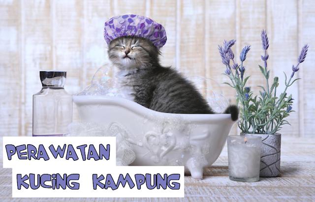 Perawatan untuk Kucing Kampung