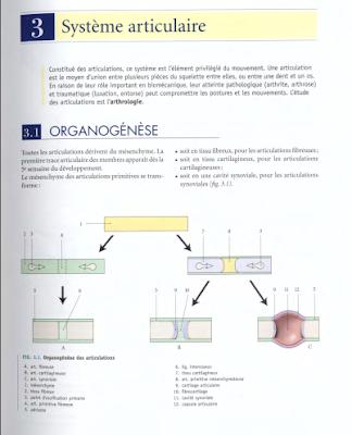 Télécharger Livre Gratuit ANATOMIE Système articulaire pdf