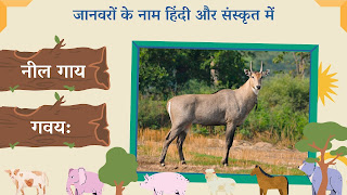 Blue cow name in sanskrit and hindi with images