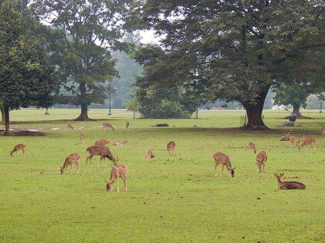 5 Lokasi Cantik yang Tersembunyi Di Bogor Yang Wajib Di Kunjungi