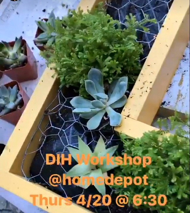 adding succulents to a vertical garden