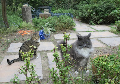Cats in our garden
