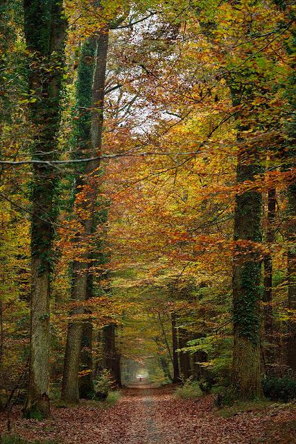 Route du Gros Fouteau, Forêt de Fontainebleau.