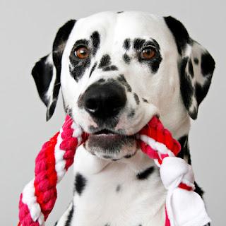 Dalmatian DIY dog toys