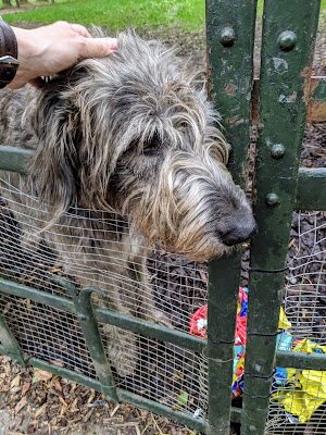 Day trip from Limerick Ireland: Irish wolfhounds at Bunratty Castle
