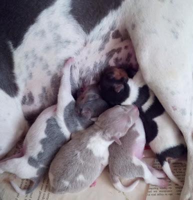 Amamentação de filhotes