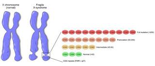 http://www.scienzita.it/lezioni/biologia/mutazioni_xfragile.jpg