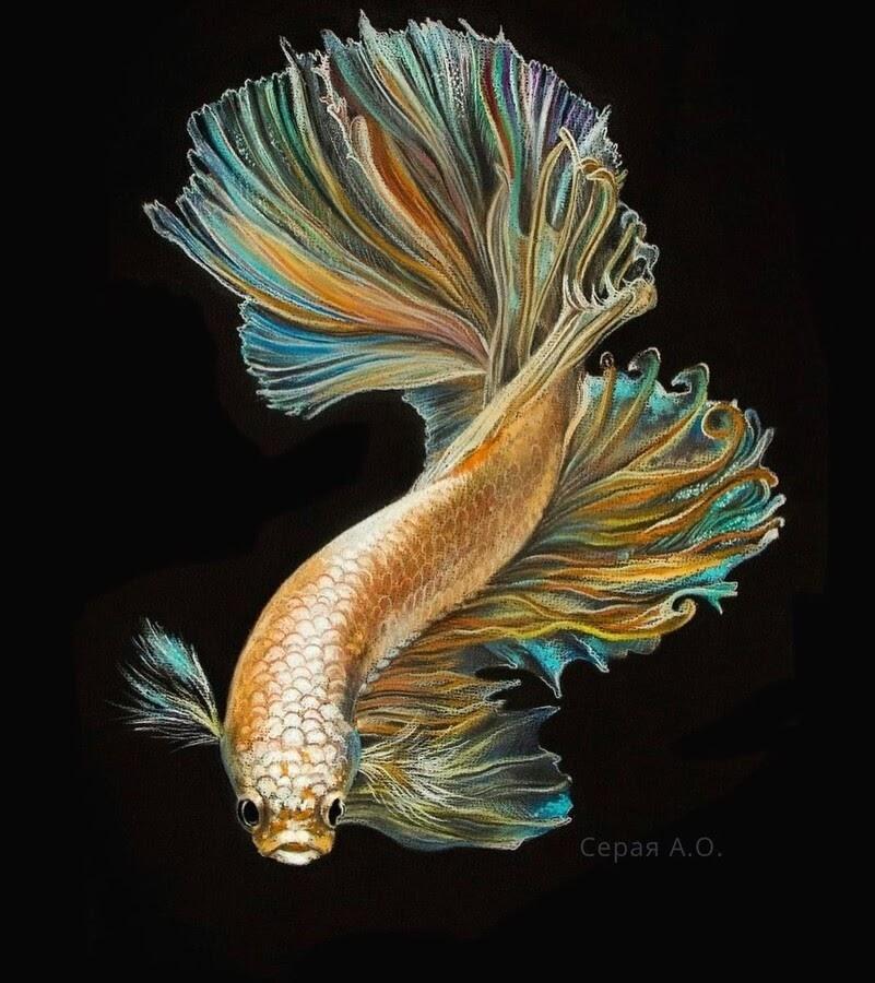 09-Siamese-fighting-fish-Анастасия-Серая-www-designstack-co