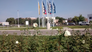 Ikea Store Flags and Kenaf Flowering Plants used modified Riparian Buffer StLouis