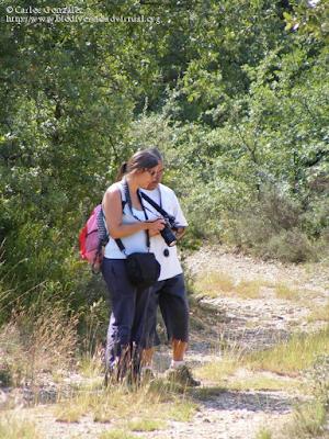 http://www.biodiversidadvirtual.org/insectarium/Pretesting-para-una-excursion-%28Punto-BV-Espacio-Pirineos-de-Graus%29-II-%282-de-2%29-img505506.html